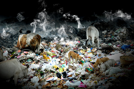 feed the poor: indian poor cattle eating not grass of waste plastic