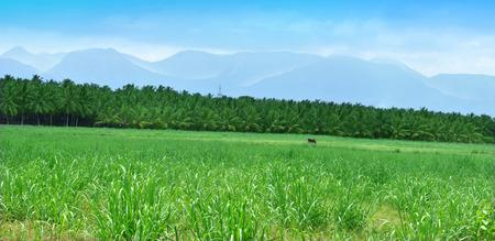 vacant land: camera shot on green natural agriculture vacant land