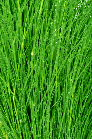 yard stick: camera shot on drops on green grass background Stock Photo