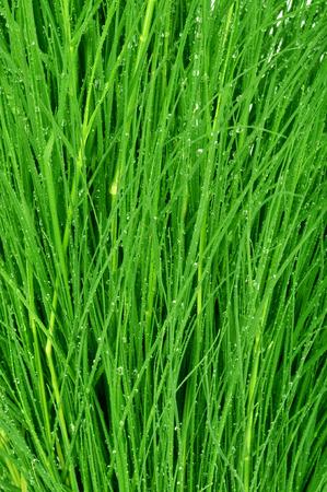 Fotocamera girato su gocce su sfondo verde erba Archivio Fotografico