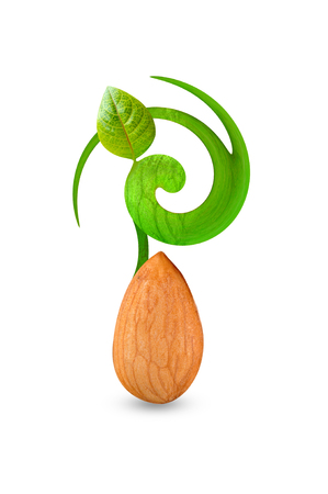 photo design on growth of single almond leaf with isolated background Stock Photo
