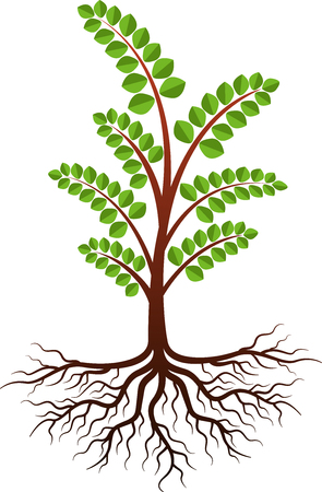 Illustration art of a moringa tree icon with isolated background