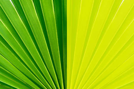 camera shot on Palm leaf texture background Stock fotó