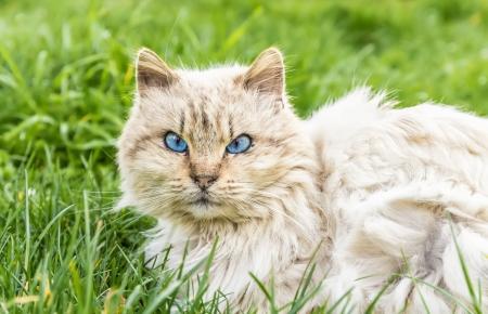 この猫は野良猫だった彼が彼を離れていたとき私は自信を持ってアプローチを残している驚くの強烈な目