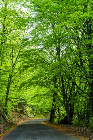enhances: The spring sun enhances the green of the beech trees in a mountain road in Tuscany