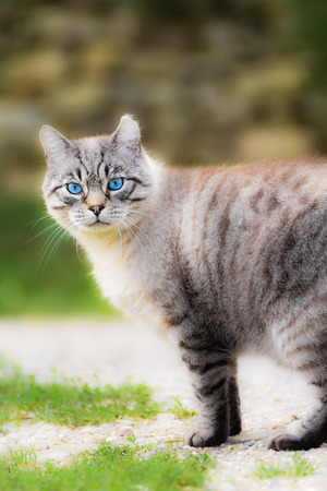 he: The intense eyes of this cat surprised me when I was away from him. Although he was a stray cat has left approach with confidence. Stock Photo
