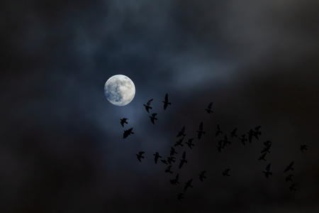 A flock of birds fly at night towards the moon