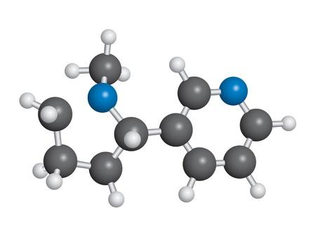 中毒性の: ニコチン分子球および棒モデル - C10H14N2