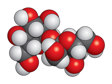 sucrose: Sucrose (sugar) molecule space fill model - C12H22O11