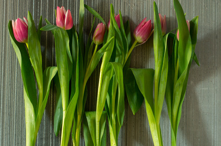 valentines day mother s: red tulips by the wall Stock Photo