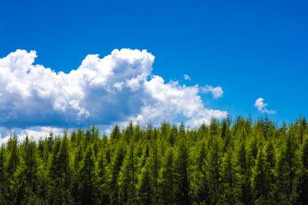 Fir bos tegen blauwe hemel in de Franse Pyreneeën