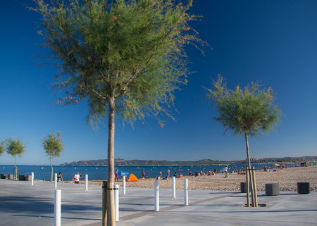 catalunya: Young trees on the walk at LEstartit beach on a sunny summer day