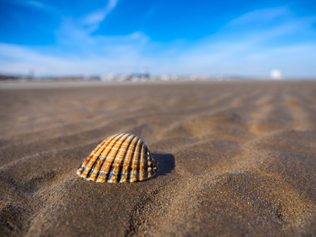 Macro view of a sea shell on French sandy beach with blue sky