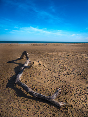 Vetical view of a drift wood on a Mediterranean beach in winter