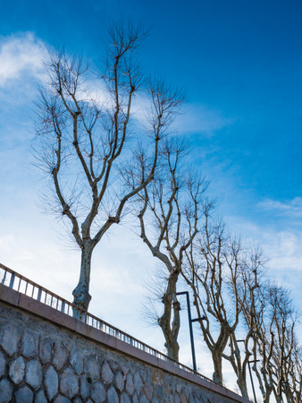 Row of trees without leaves in winter on a sunny day