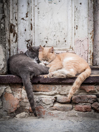 Street cats in the Old Town of Tbilisi, Georgia