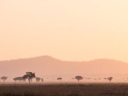 savana: Sunrise over savana in Tanzania, Africa.