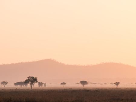 savana: Sunrise over savana in Tanzania, Africa.