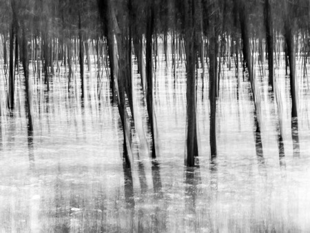 Forest - abstract impressionist blurry background, created from a photo made with panning technique. Landscape orientation, black and white. Reklamní fotografie