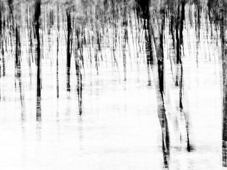arboles blanco y negro: Bosque - resumen impresionista fondo borroso, creado a partir de una foto hecha con la t�cnica de la panor�mica. Orientaci�n horizontal, blanco y negro. Foto de archivo
