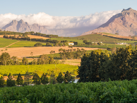 south africa nature: Landscape in Stellenbosch, Western Cape, South Africa, at sunset.