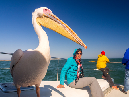 WALVIS BAY, NAMIBIA - JUNE 22, 2016: Friendly pelican sitting on a boat next to tourists on a cruise in Walvis Bay. Editorial