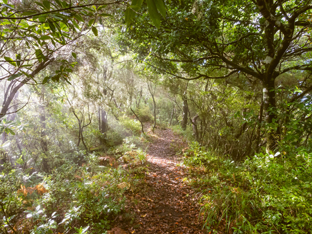 Path in a forest on the Madeira Island, Portugal.