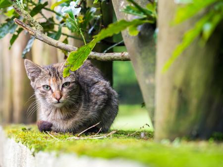 Stray kitten in Madeira island, Portugal.