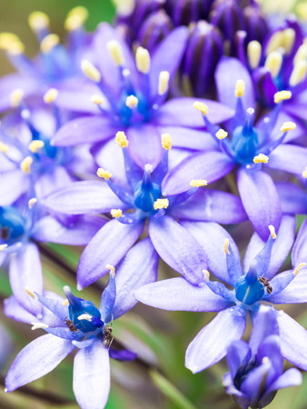 Close up photo of wild blue flowers growing on a meadow in Portugal.