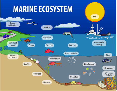 Vector illustration of Marine eosystem