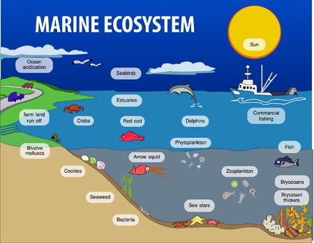 Vector illustration of Marine eosystem
