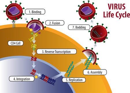 Vector illustration of Virus Life cycle Illustration