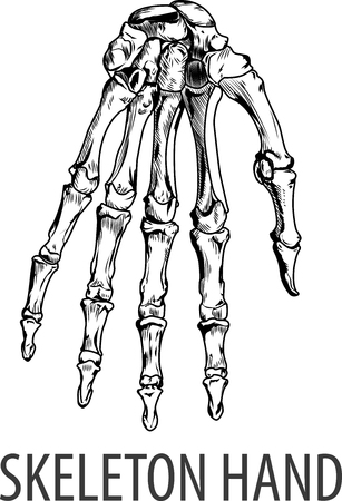 Vectors illustration of Skeleton hand Иллюстрация