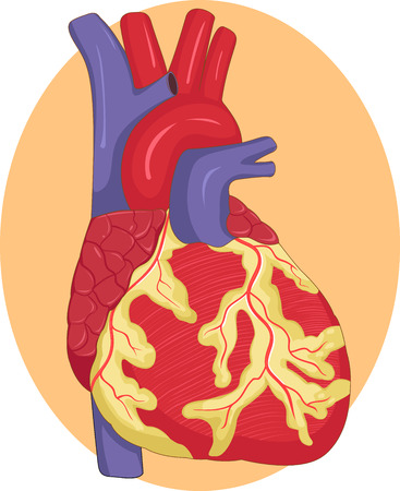 Vector illustration of Human liver graphic