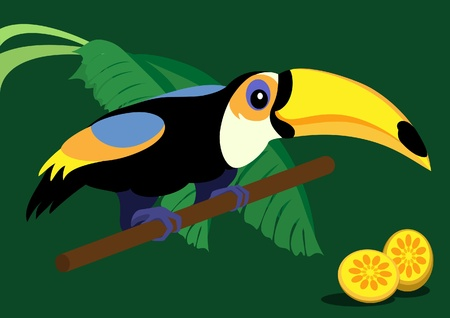 Funny toucan illustration Vector
