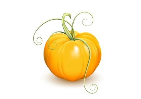 Ripe pumpkin with tendrils isolated on white background Stock Vector - 10045424