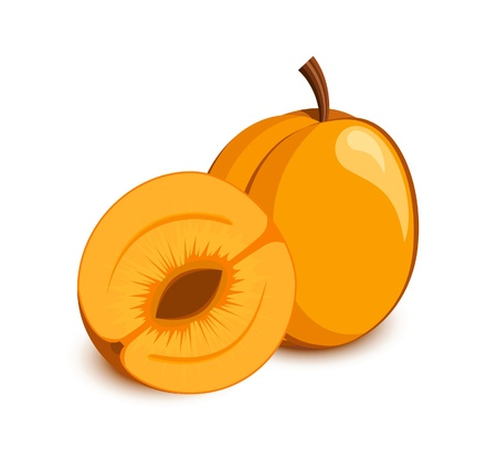 Apricot icon. Fruits and vegetables collection Stock Vector - 10045438