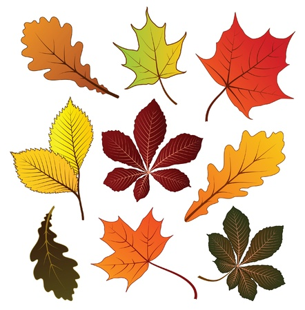 autumn leaves falling: Set of colorful autumn leaves for your design
