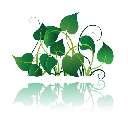 vine and leaves of vine: Green leaves with flourishes, summer icon