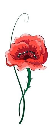 Poppy flower isolated on white Stock Vector - 13904071