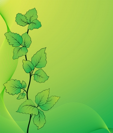 floral decoration: Twig with green leaves, summer background