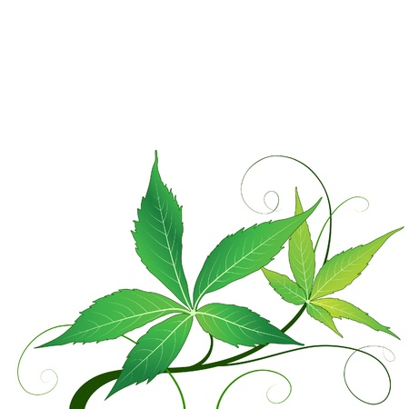 Green leaves isolated on white Vector