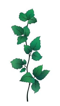 Twig with green leaves isolated on white Vector