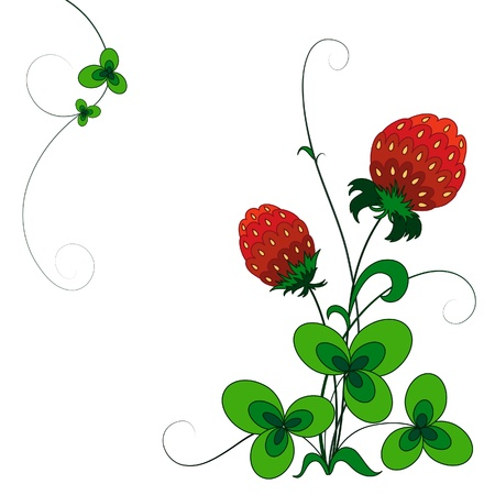 Decorative strawberry bush, isolated on white Vector