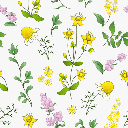 officinal: Seamless pattern of officinal herbs �?? chamomile, St. Johns wort, knotgrass, agrimonia and peppermint on white