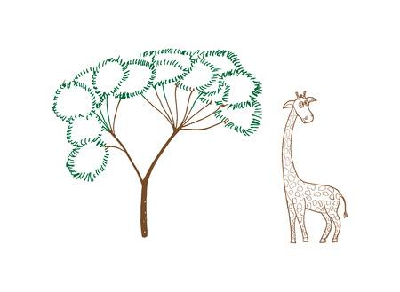 giraffa: Adulta hermosa jirafa que nos mira, la ilustraci�n en blanco