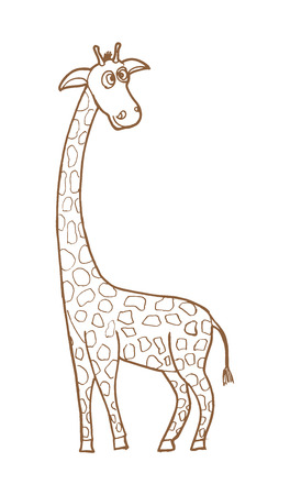 camelopardalis: Beautiful adult Giraffe looking at us, illustration on white Illustration