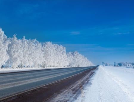 美しい冬の森。冷ややかな日の冬の森のパノラマ 写真素材