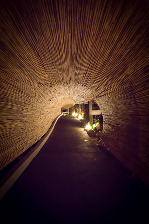 bamboo tunnel photo