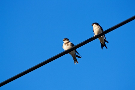 Swallow sitting on metal wire over blue sky Stock Photo - 8347025